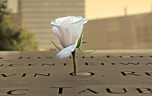 White rose at the 9-11 Memorial in New York City